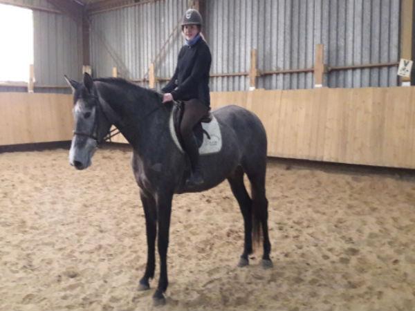 nouveau chevaux et poneys