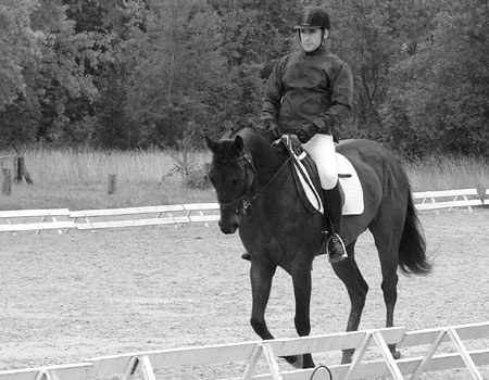 Dressage du cheval